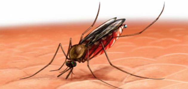 صور مرض الملاريا , شاهد اخطار الملاريا على الوطن العربى