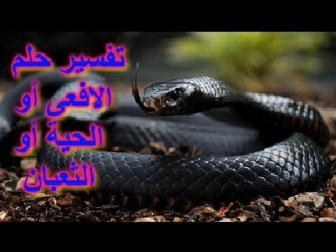 بالصور تفسير رؤية الثعبان في المنام , بالفيديو تفسير حلم الثعبان فى المنام 5801