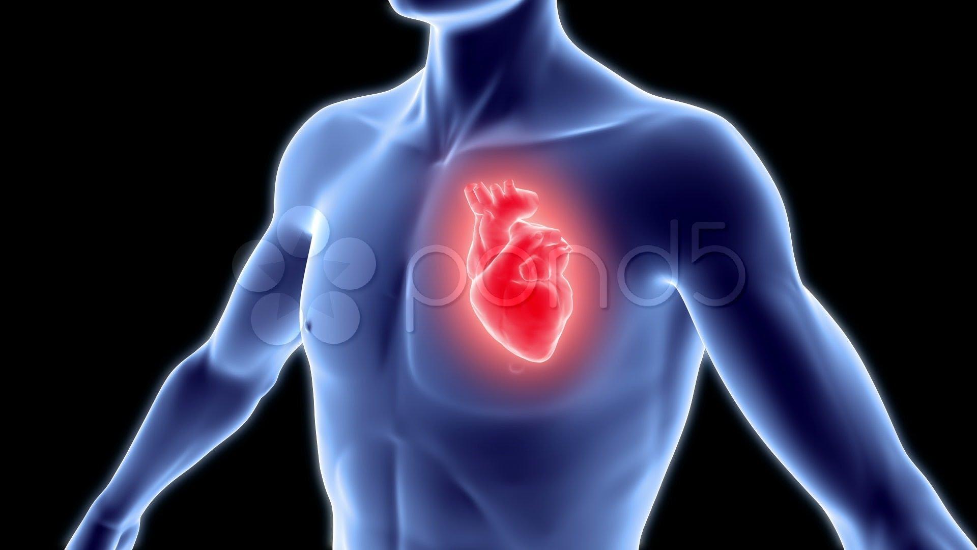 صور صور قلب الانسان , بالصور شكل قلب الانسان