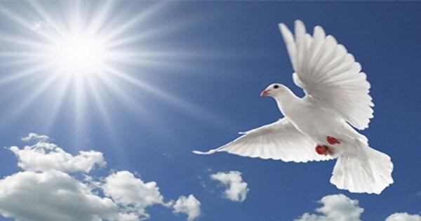 بالصور صور عن السلام , اجمل صور عن السلام 5857 3