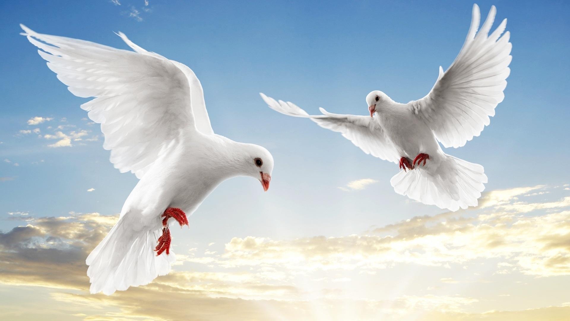 بالصور صور عن السلام , اجمل صور عن السلام 5857 7
