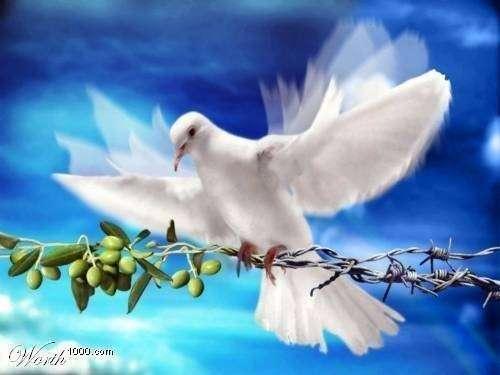 صورة صور عن السلام , اجمل صور عن السلام