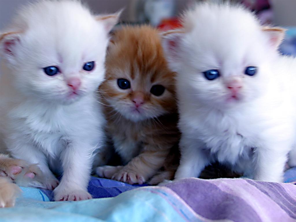 بالصور صور قطط جميلة , بالصور اجمل قطط فى العالم 5860 4