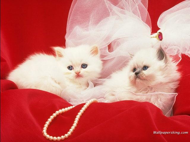 بالصور صور قطط جميلة , بالصور اجمل قطط فى العالم 5860 5