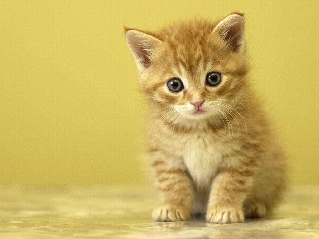 بالصور صور قطط جميلة , بالصور اجمل قطط فى العالم 5860 6
