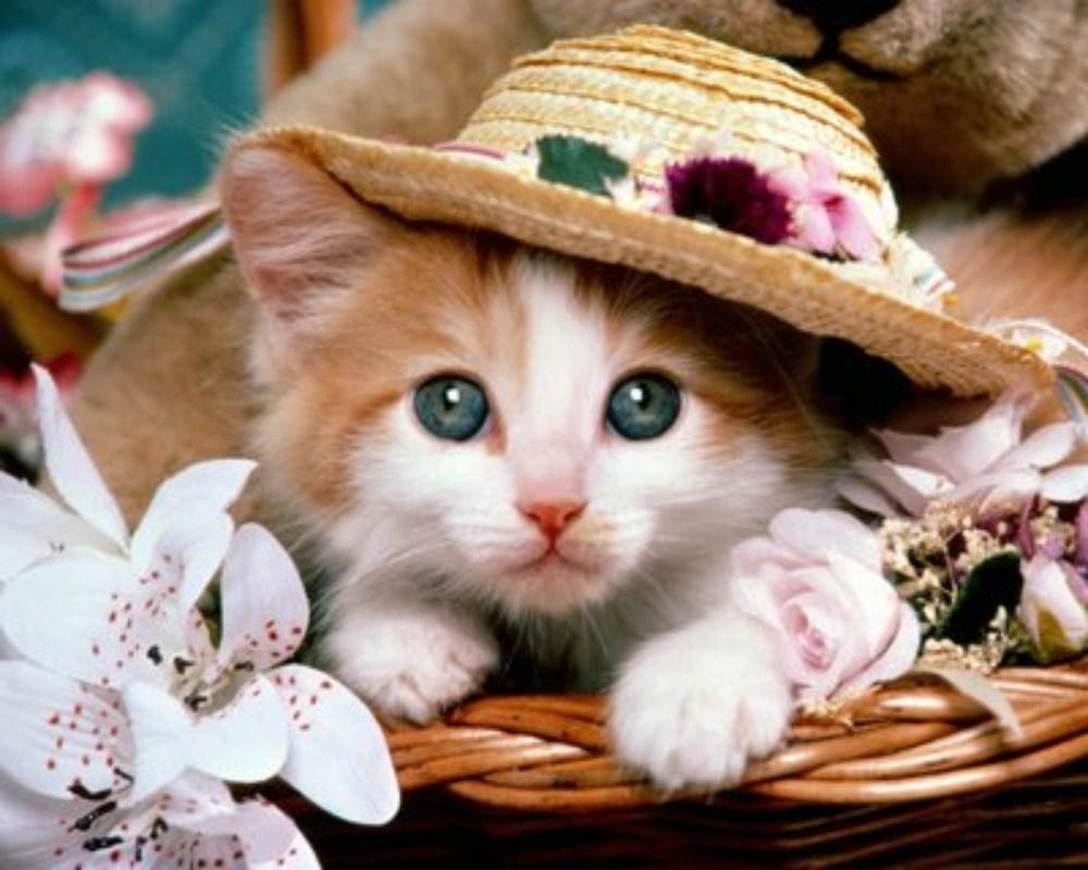 بالصور صور قطط جميلة , بالصور اجمل قطط فى العالم 5860 7