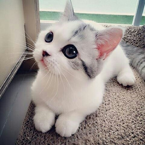 بالصور صور قطط جميلة , بالصور اجمل قطط فى العالم 5860 9