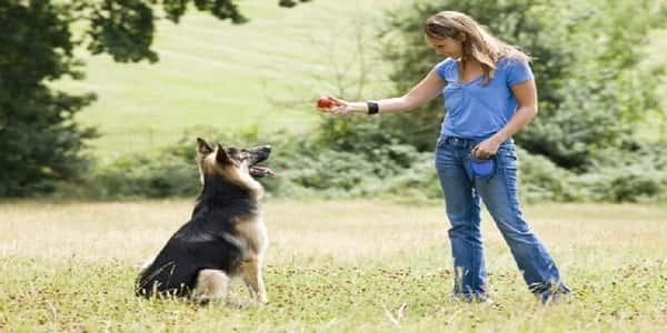 صوره كيفية تدريب الكلاب , اصول تدريب الكلاب