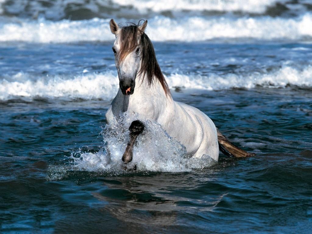 صور اجمل صور خيول , اكثر صور الخيول جمالا