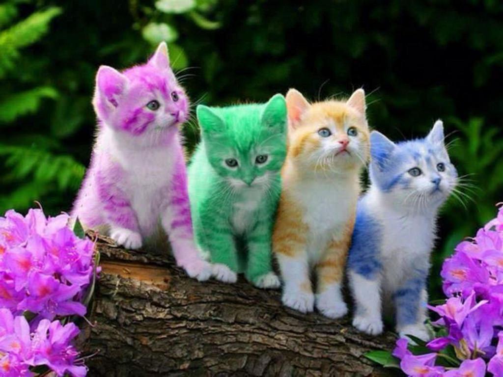 صورة اجمل الصور للقطط في العالم , صور مميزة للقطط
