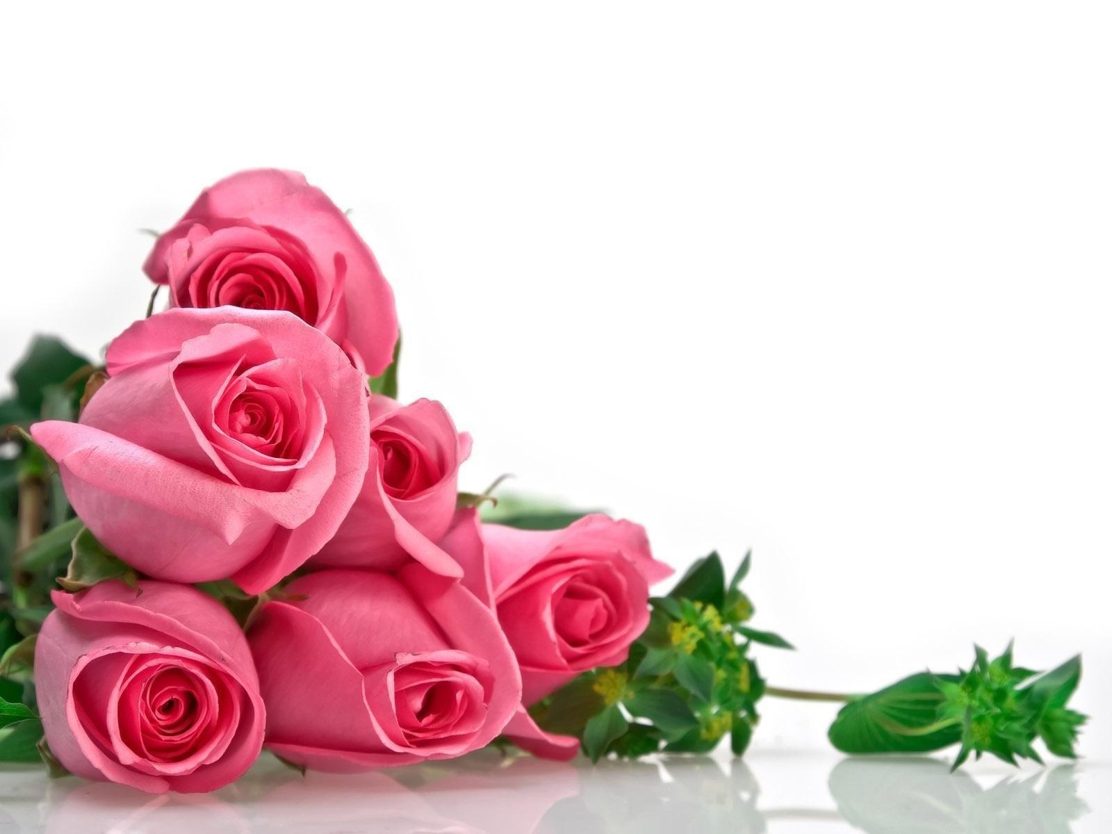 صور ورد خلفيات اجمل صور الورد صور بنات
