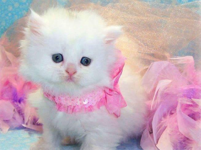 صور اجمل صور قطط , اجدد صور القطط