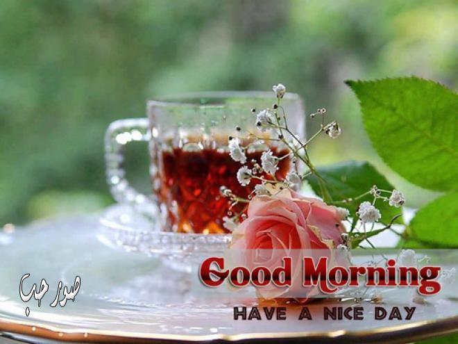 بالصور صباح الخير حبيبتي , احلى صور لصباح الخير حبيبتى 6019 10