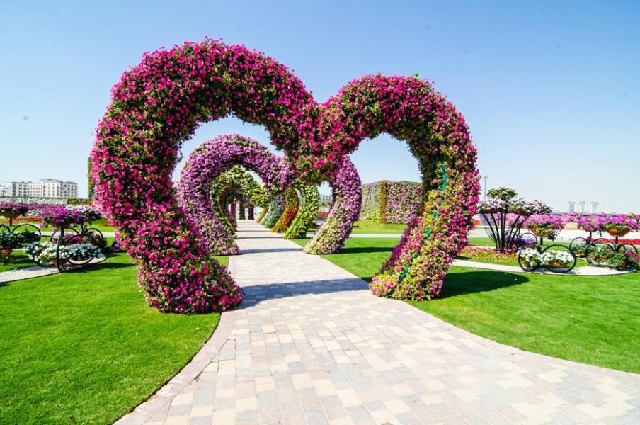 بالصور صور اجمل الورود , بالصور اجمل الورود الطبيعيه 6057 10