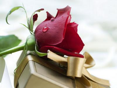 بالصور صور اجمل الورود , بالصور اجمل الورود الطبيعيه 6057 13