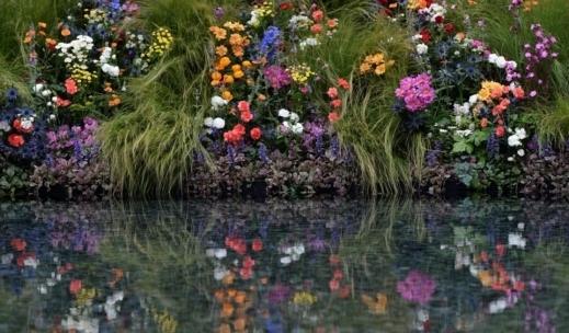 بالصور صور اجمل الورود , بالصور اجمل الورود الطبيعيه 6057 16
