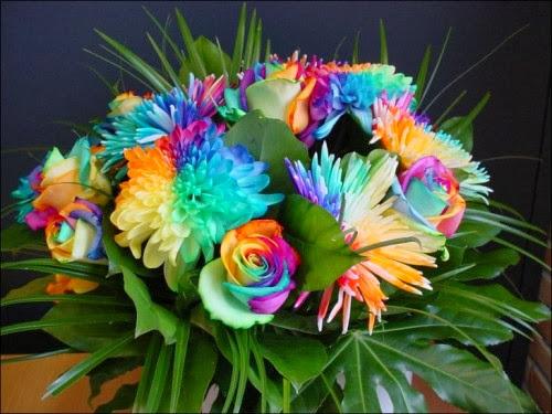 بالصور صور اجمل الورود , بالصور اجمل الورود الطبيعيه 6057 18