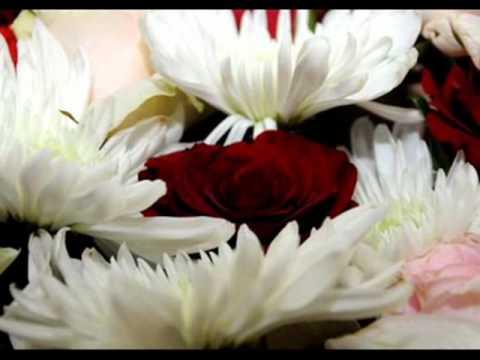 بالصور صور اجمل الورود , بالصور اجمل الورود الطبيعيه 6057 2