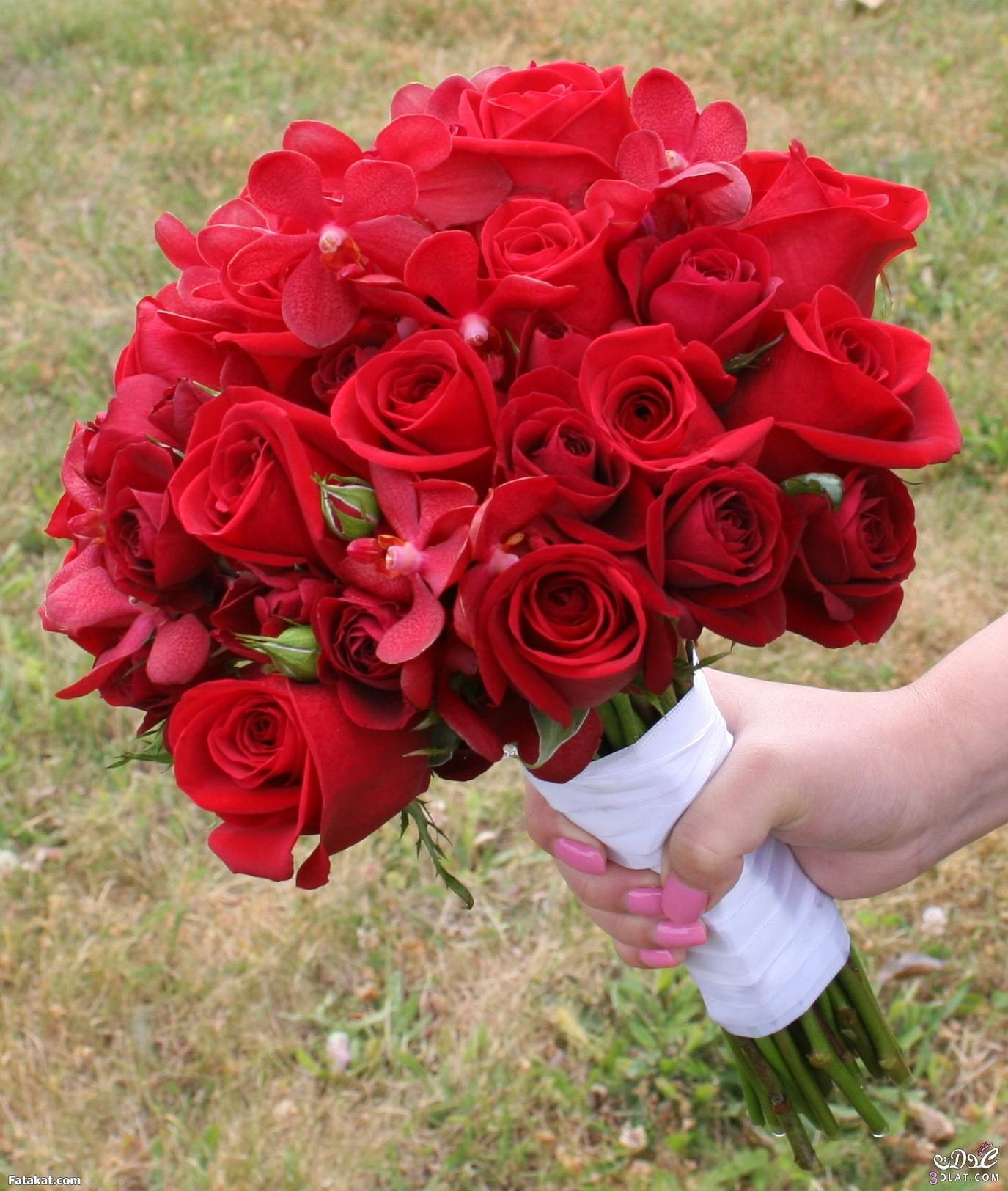 بالصور صور اجمل الورود , بالصور اجمل الورود الطبيعيه 6057 5