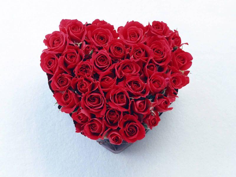 بالصور صور اجمل الورود , بالصور اجمل الورود الطبيعيه 6057 6
