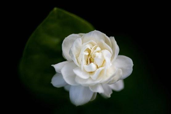 بالصور صور اجمل الورود , بالصور اجمل الورود الطبيعيه 6057 8