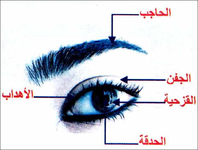 بالصور مكونات العين , معلومات عن العين وتفاصيلها الدقيقة واجزائها الداخلية 1282 1