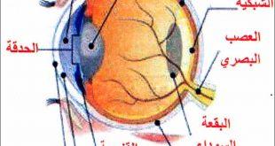 بالصور مكونات العين , معلومات عن العين وتفاصيلها الدقيقة واجزائها الداخلية 1282 2 310x165