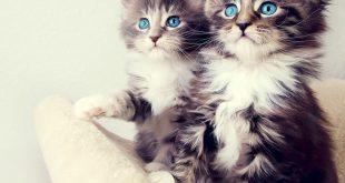 خلفيات قطط , عالم قطط قطط خلفية شاشات