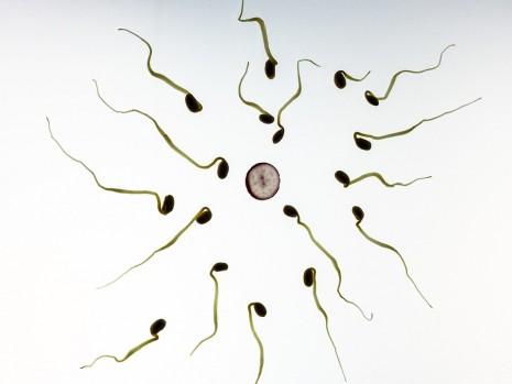 بالصور افضل وقت للحمل , ما هو الوقت الامثل لحدوث الحمل 1557 2