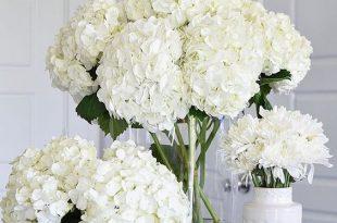 بالصور ورود جميلة , اروع الصور للورد والزهور 1619 11 310x205