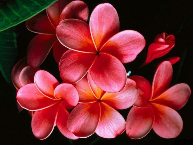 بالصور ورود جميلة , اروع الصور للورد والزهور 1619 2