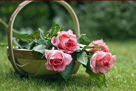 بالصور ورود جميلة , اروع الصور للورد والزهور 1619 8