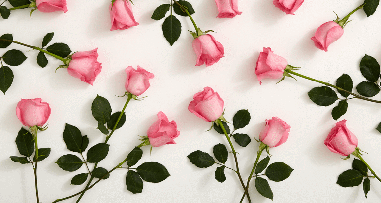 بالصور ورود جميلة , اروع الصور للورد والزهور 1619