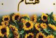 بالصور معنى اسم هشام , اجمل معانى اسم هشام 2015 2 110x75