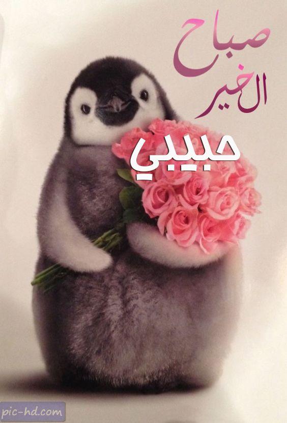بالصور حبيبي صباح الخير , مااجمل الصباح مع حبيبك 2032 7