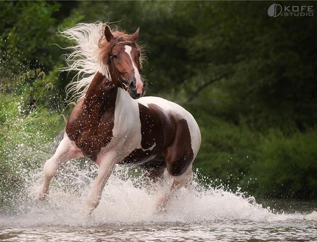 بالصور خيول عربية , الخيل العربى الاصيل 2060 4