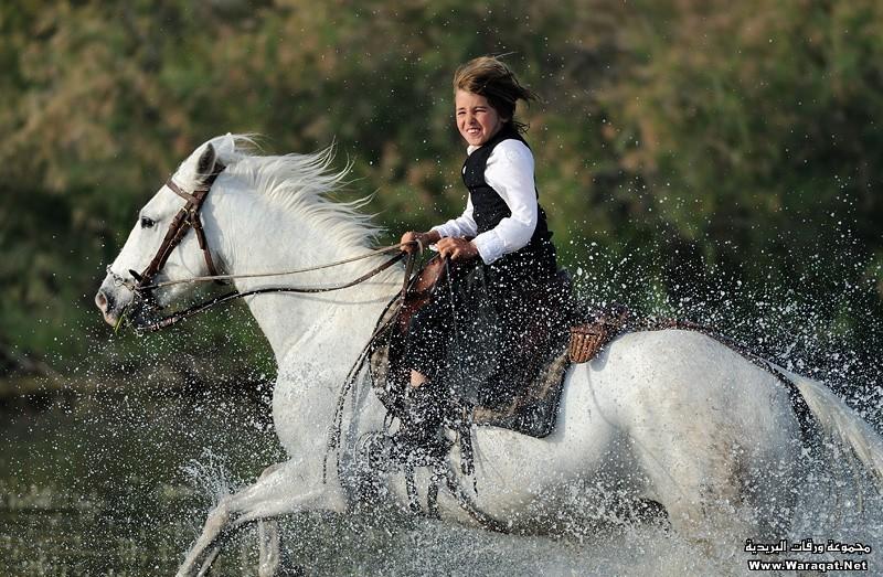 بالصور خيول عربية , الخيل العربى الاصيل 2060 5