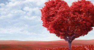 صوره كيف اعرف اني احب , كيف اعرف انى وقعت فى الحب