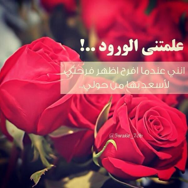 بالصور كلمات عن الورد , اجمل عبارات عن الورد 2145 2