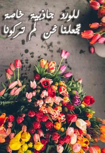 بالصور كلمات عن الورد , اجمل عبارات عن الورد 2145 3