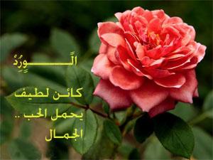 بالصور كلمات عن الورد , اجمل عبارات عن الورد 2145 7