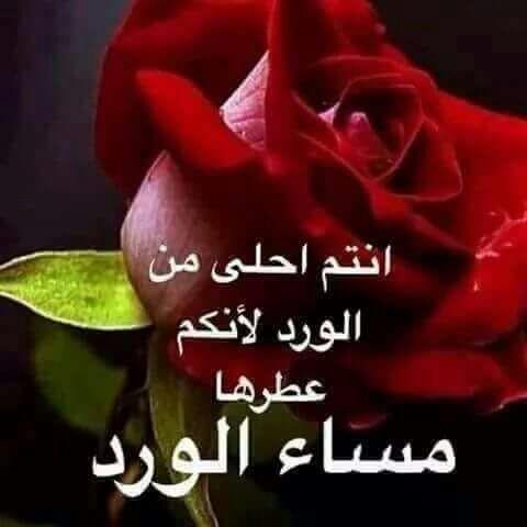 بالصور كلمات عن الورد , اجمل عبارات عن الورد 2145 8