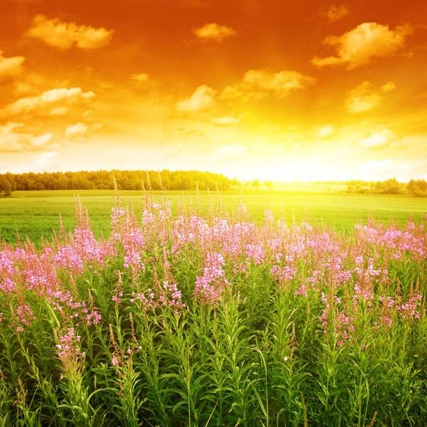 بالصور منظر جميل , اروع المناظر الطبيعية الخلابة 2812 6