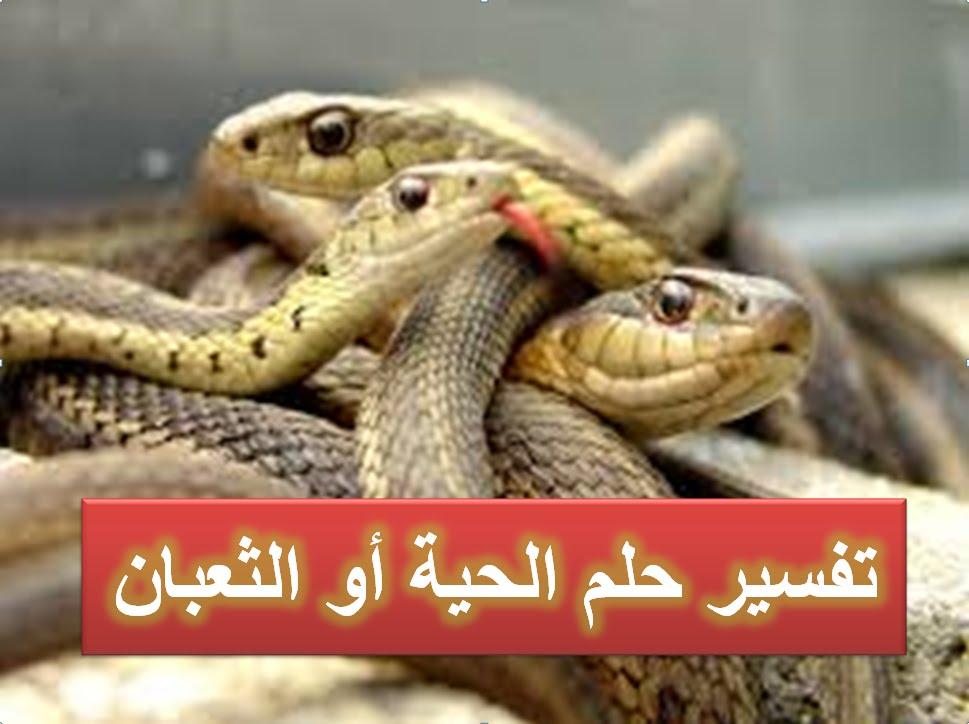 صورة الثعابين في المنام , تفسير روية الافاعى لابن سيرين 2823