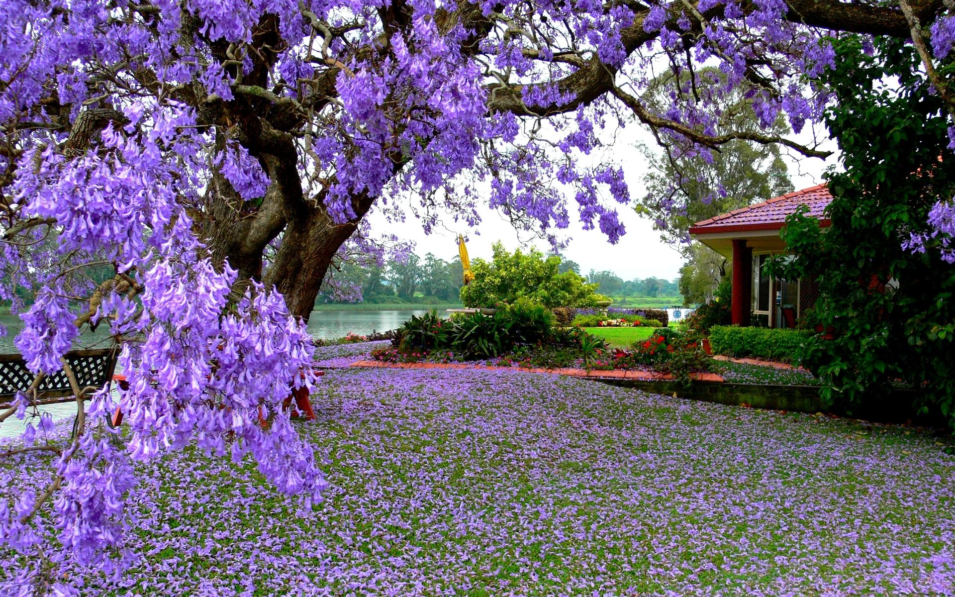 بالصور صور فصل الربيع , اروع صور لفصل الربيع وجماله 2841 10