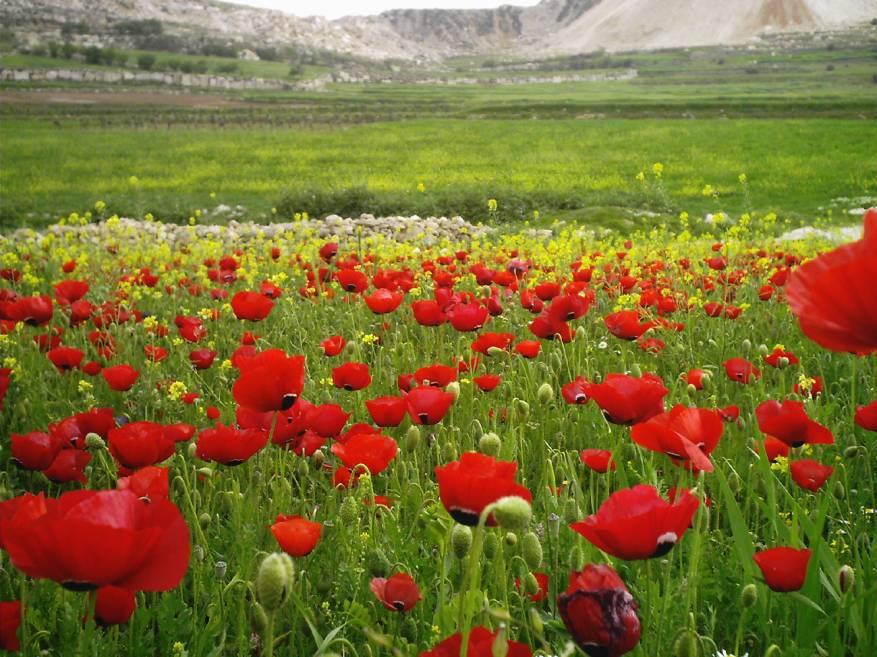 بالصور صور فصل الربيع , اروع صور لفصل الربيع وجماله 2841 11