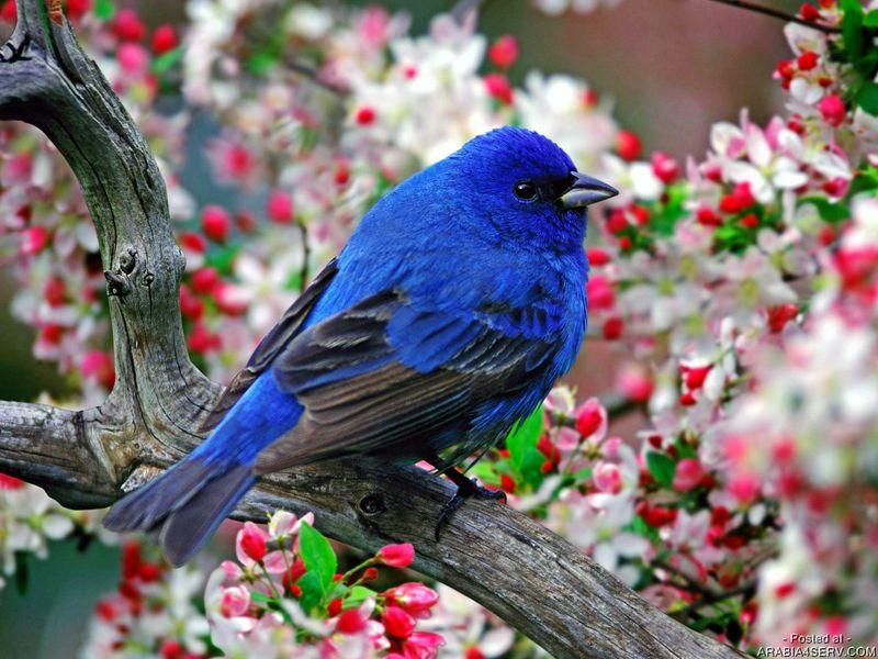 بالصور صور فصل الربيع , اروع صور لفصل الربيع وجماله 2841 14