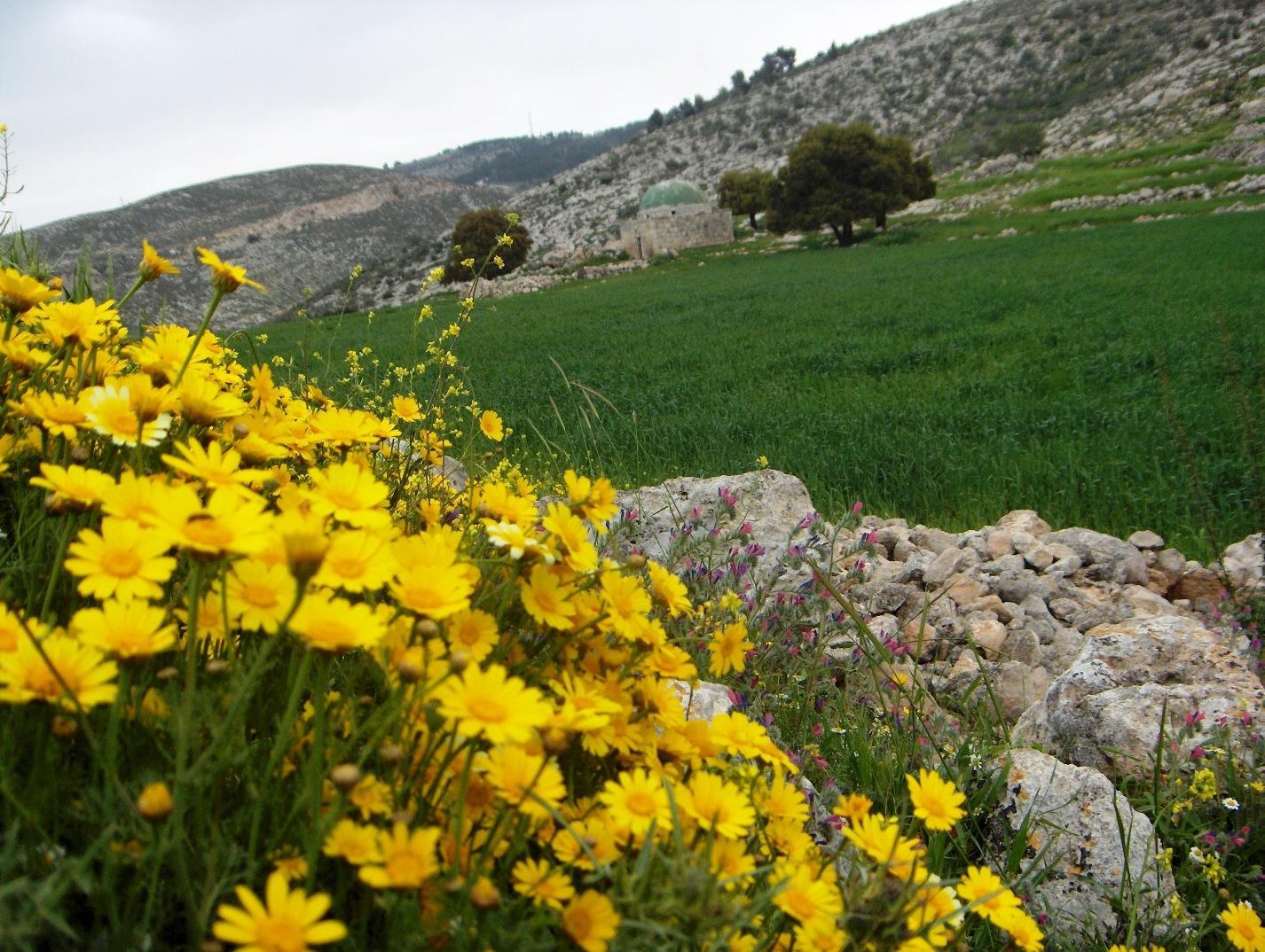 بالصور صور فصل الربيع , اروع صور لفصل الربيع وجماله 2841 15