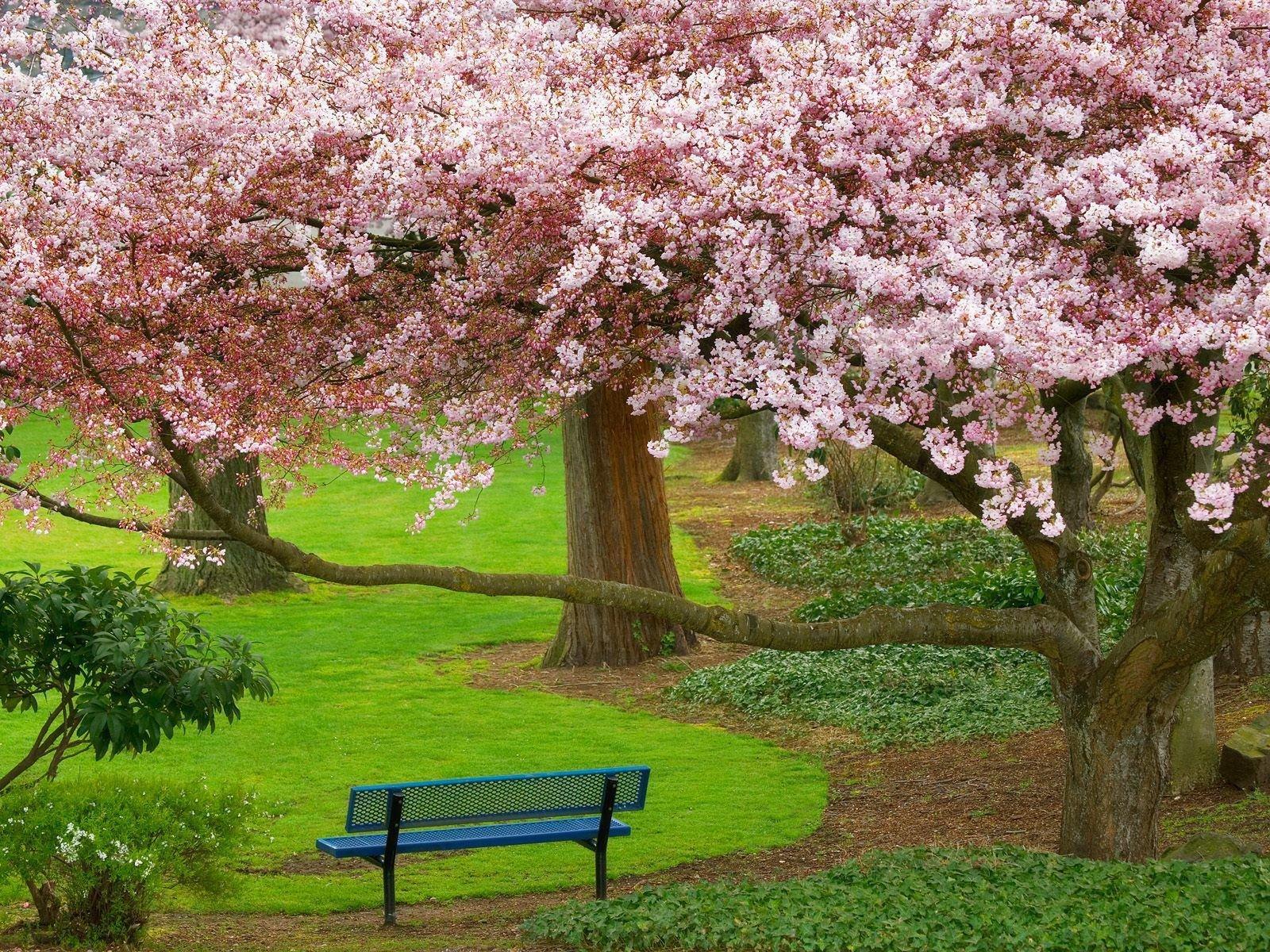 بالصور صور فصل الربيع , اروع صور لفصل الربيع وجماله 2841 2