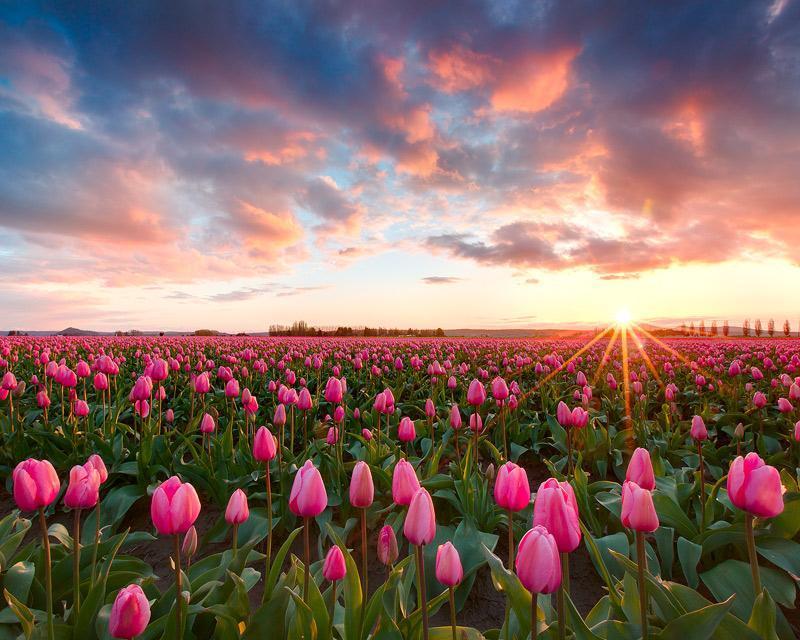 بالصور صور فصل الربيع , اروع صور لفصل الربيع وجماله 2841 8